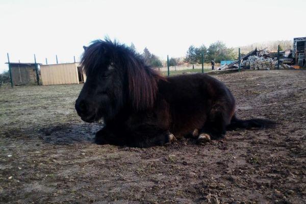 shetlasky-pony-selfie2221709A-9DB7-2480-EA81-D85BB735C0B3.jpg